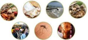 Parazitol - para parasitas - comentarios - funciona - Encomendar